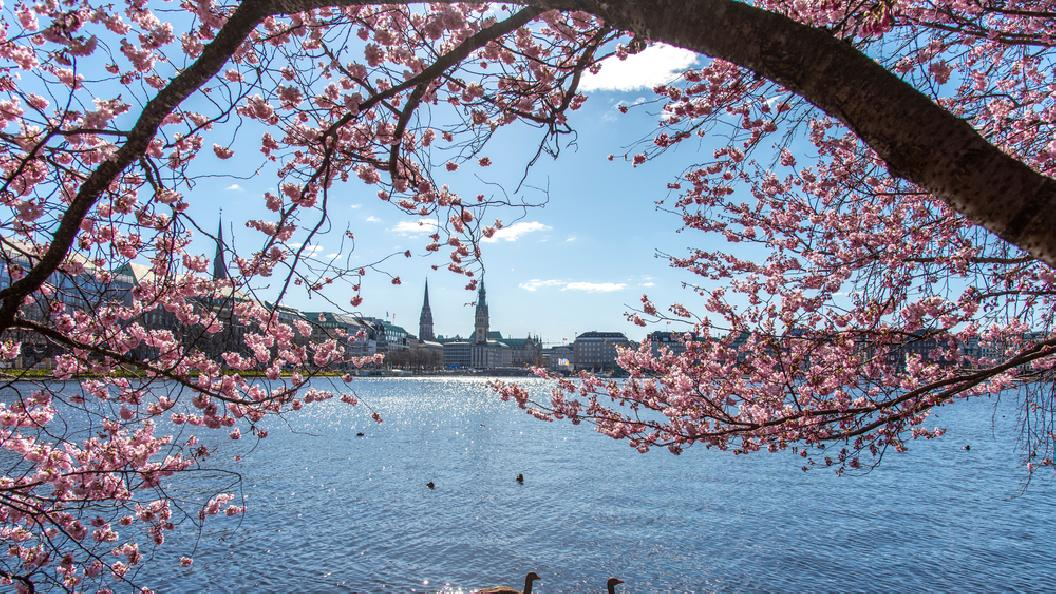Networking beim Kirschblütenfest